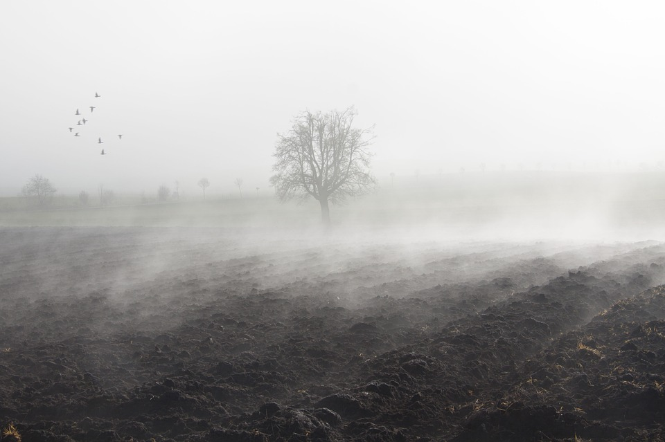 Free photo: Fog, Mood, Landscape, Fog Bank.
