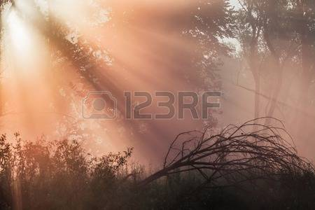 Tree Oak Stock Photos & Pictures. Royalty Free Tree Oak Images And.