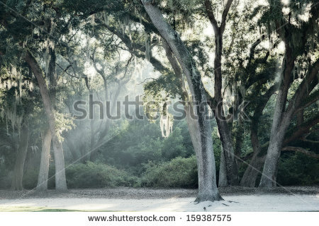 Spanish Moss Stock Photos, Royalty.
