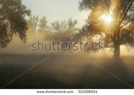 Fog Tree Stock Photos, Royalty.