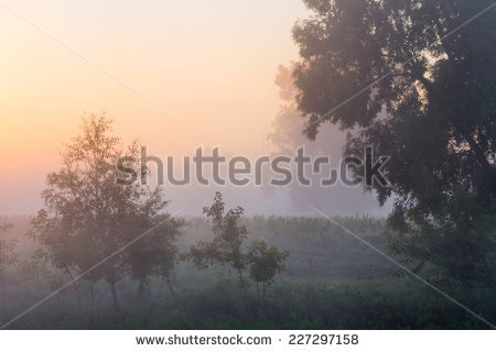 Strong Morning Fog Forest Stock Photo 167595002.