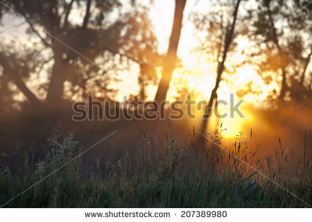 Foggy Landscape Stock Photos, Royalty.