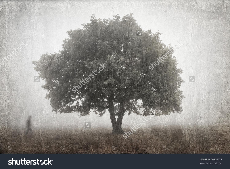 Lone Oak Tree In The Fog Stock Photo 90806777 : Shutterstock.