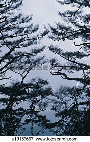 Picture of plant, tree, wood, fog, leaf u19159667.