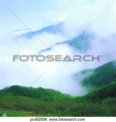 Stock Images of mountain, fog, cloud, tree, plant, nature.