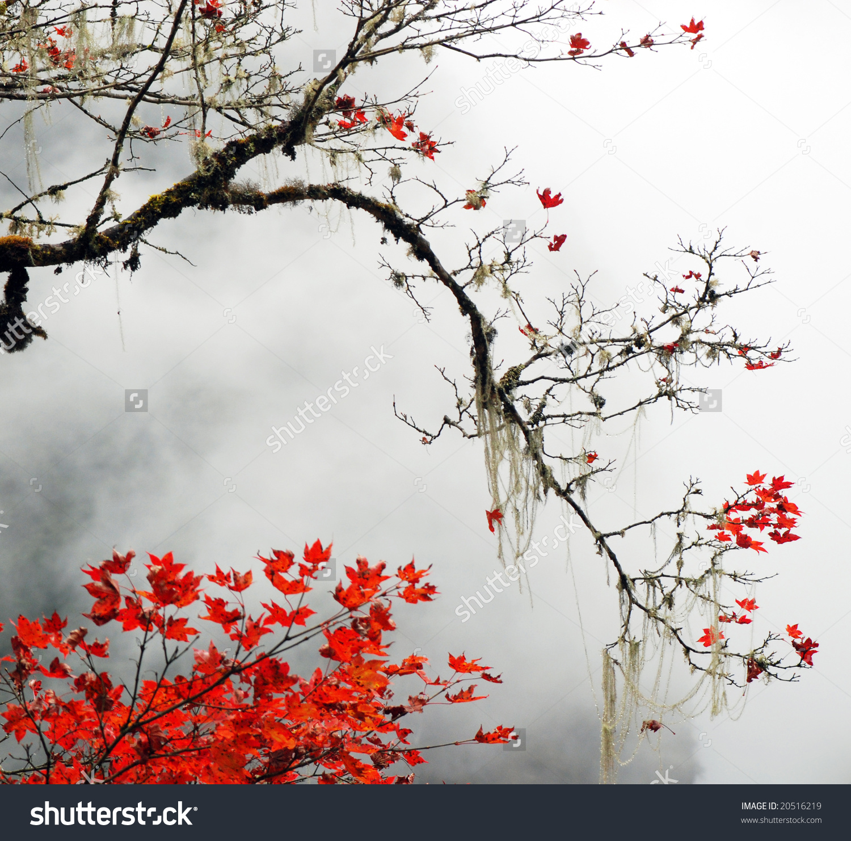 Autumn Foggy Day Snow Mountains Stock Photo 20516219.