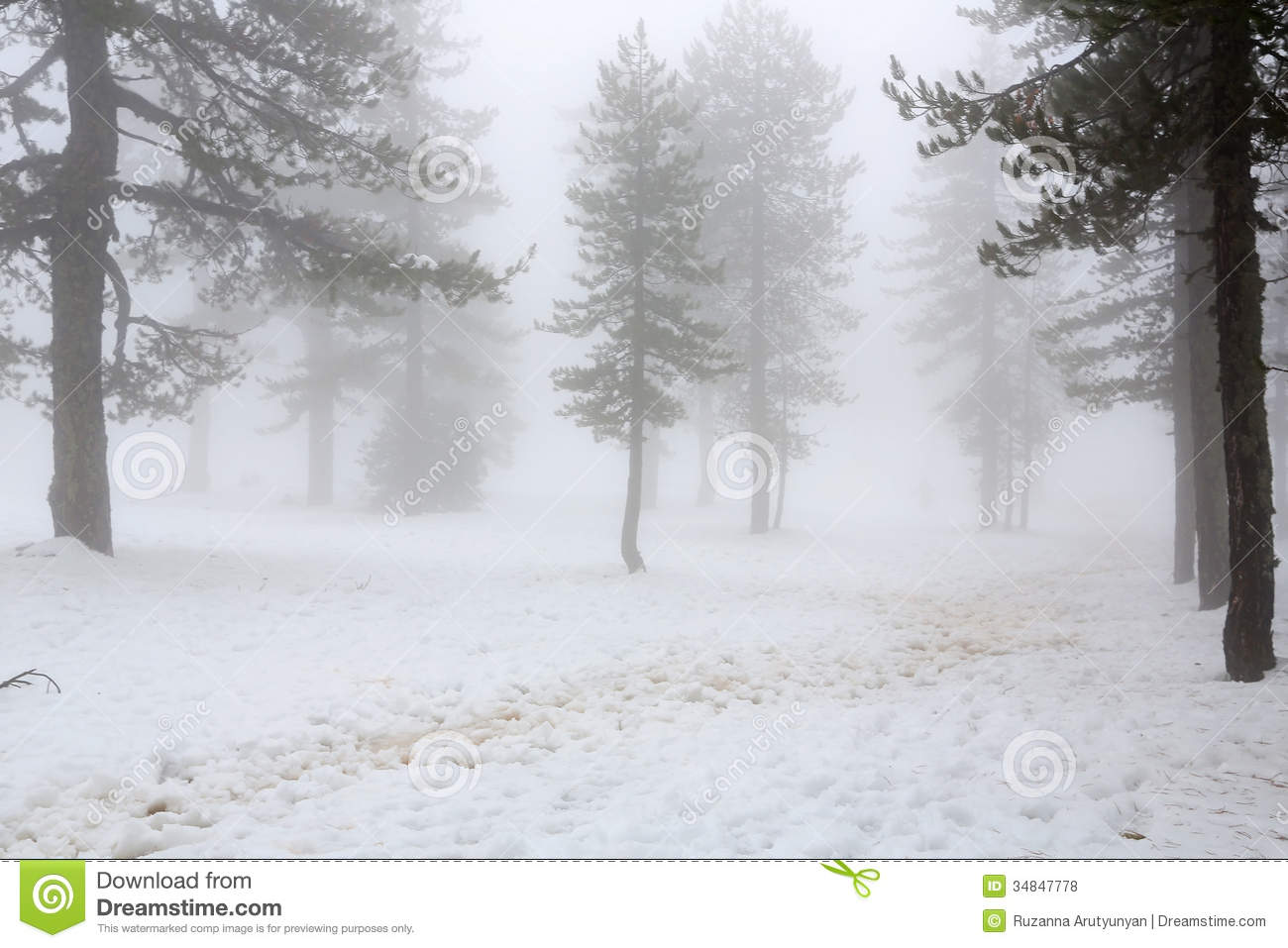 Winter Foggy Day Royalty Free Stock Photos.