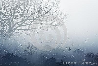 Foggy Fall Clipart.