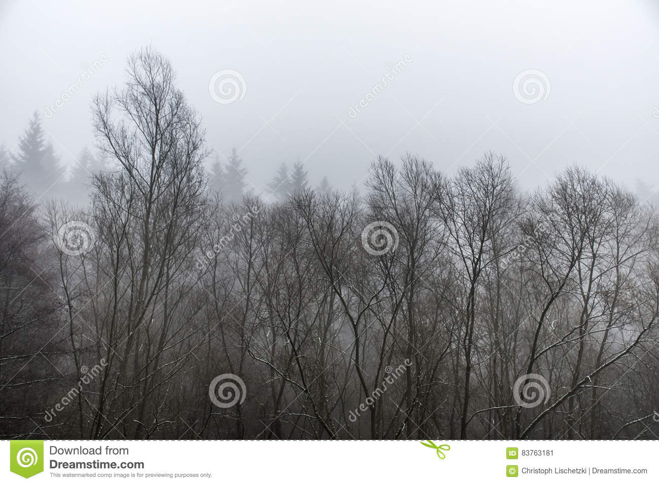Frozen Winter Trees In Forest The Fog Foggy Day Stock Photo.