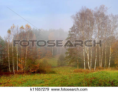 Stock Photograph of foggy morning k11657279.
