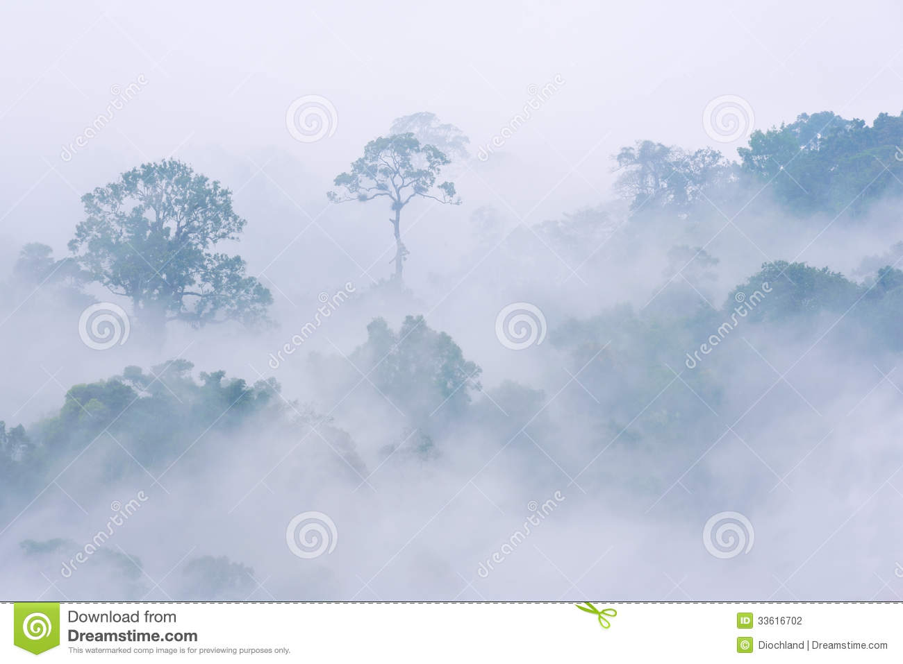 Rainforest Morning Fog Royalty Free Stock Image.