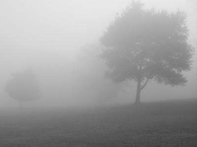 andykazie Photo Keywords: mist, field, fog.