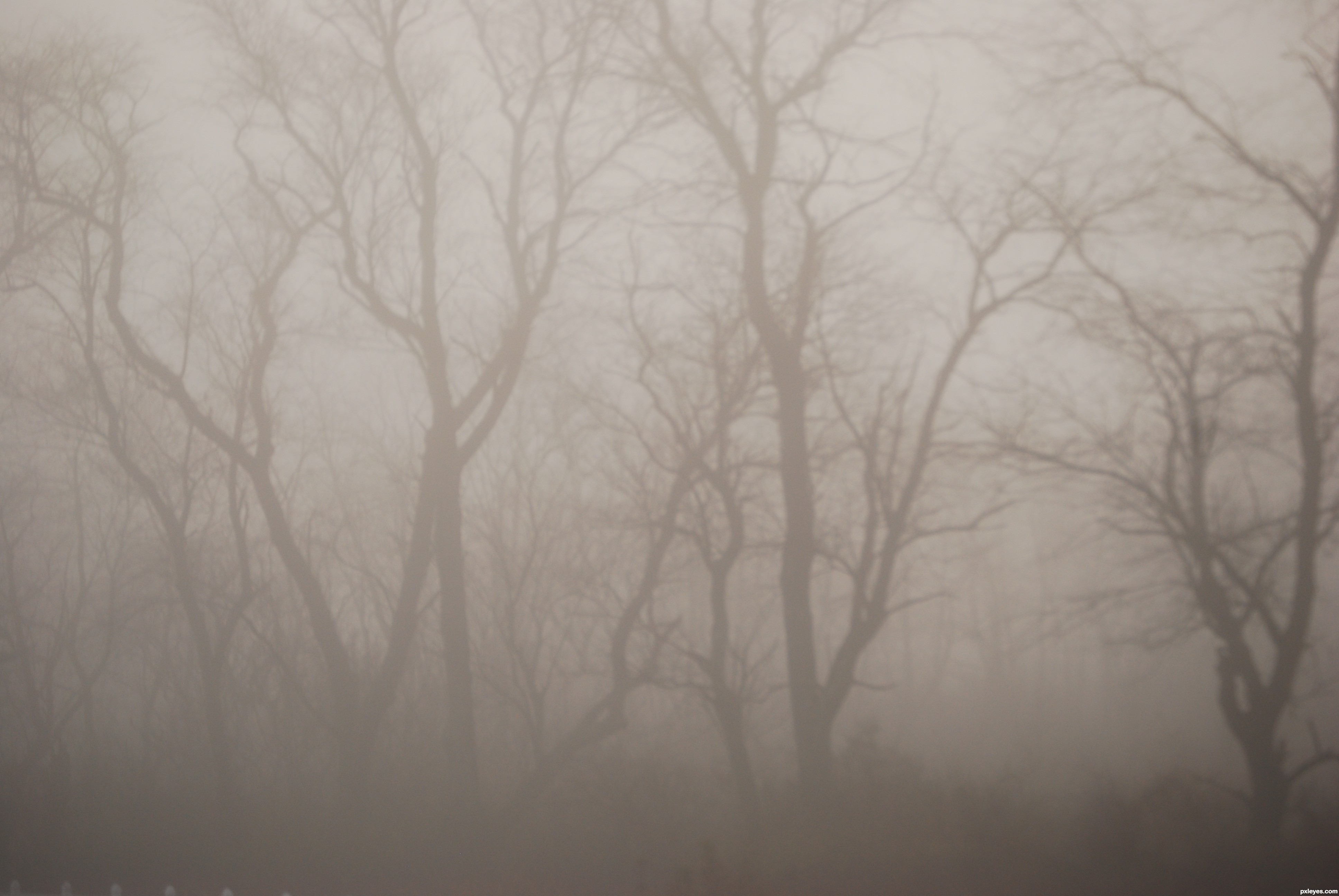 Foggy Tree picture, by WYSIWYG for: fog photography contest.