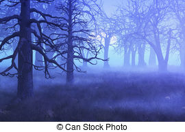 Foggy Illustrations and Clipart. 2,288 Foggy royalty free.