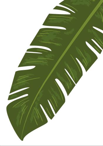 Quadro e poster Folhagem Verde Bananeira Tropical.