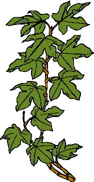 Leaves Clip Art.