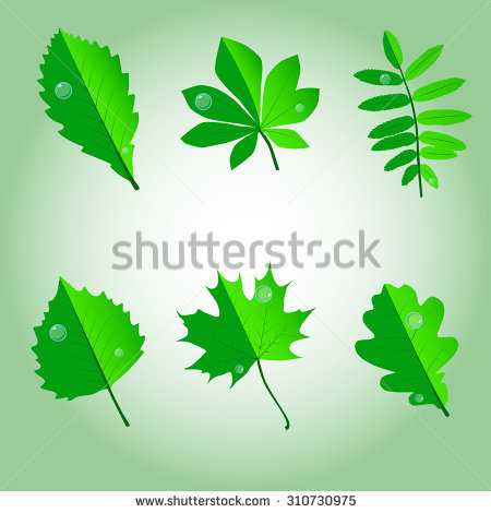 Birch Maple Foliage Green Red Foliage Stock Vector 310730969.