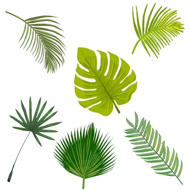 Foliage Vectors, Photos and PSD files.