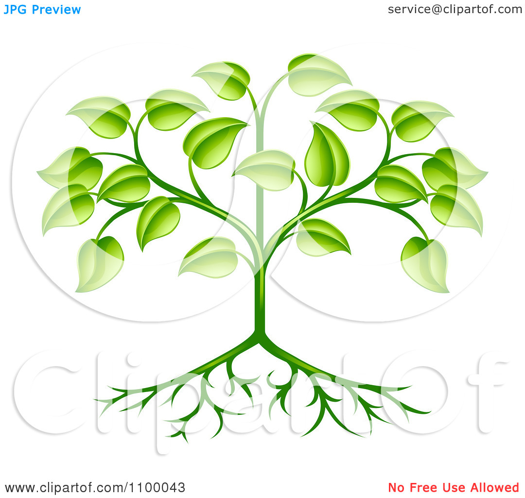 Clipart Organic Green Plant With Leaves And Roots.