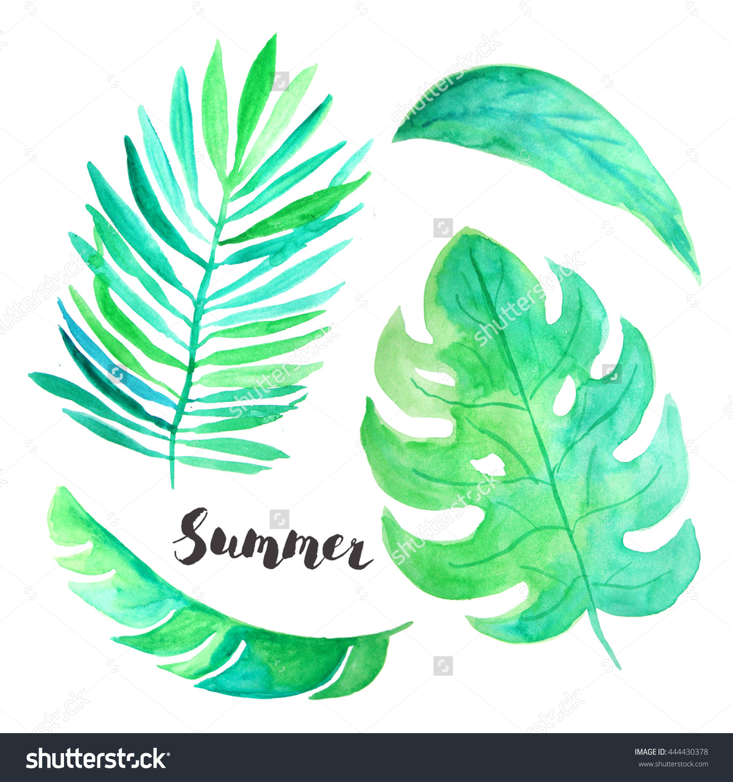 Watercolor Hand Painted Tropical Leaves Plants Stock Illustration.