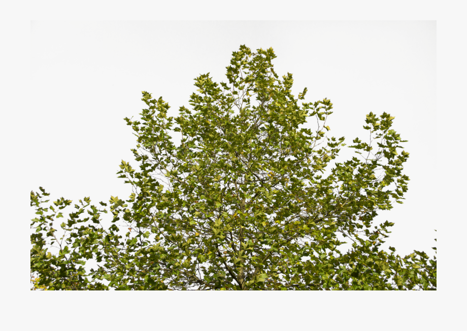 Tree Branches Green Plant Png Image.