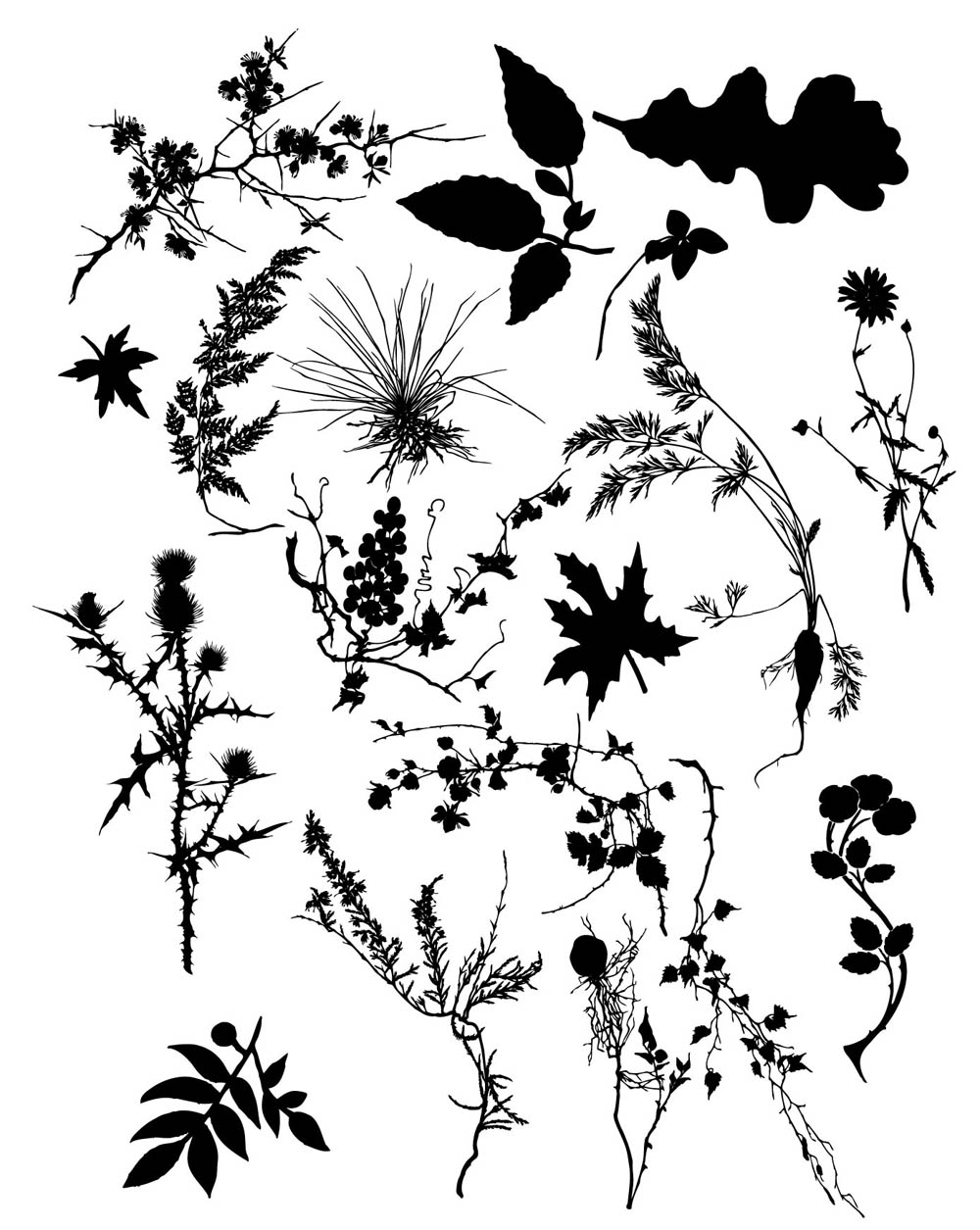 Beautiful foliage plant silhouette vector Free Vector / 4Vector.