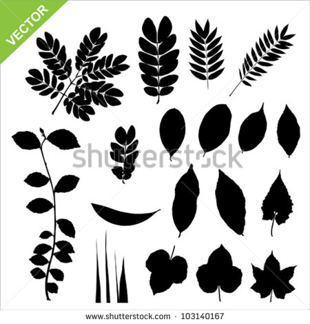 Set Of Silhouette Leaves Vector.