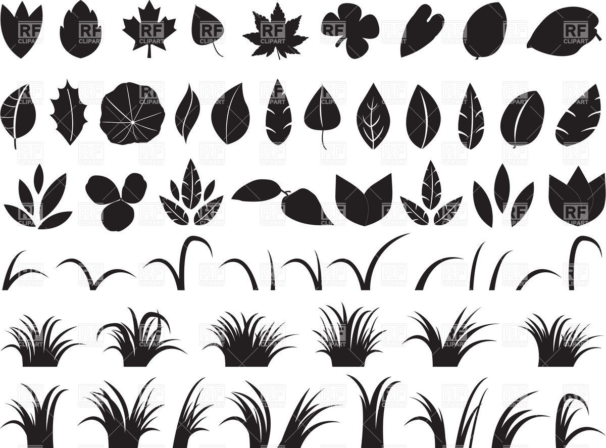 Leaves collection.