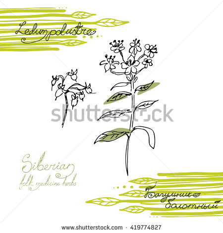 Herb Plants Stock Photos, Royalty.