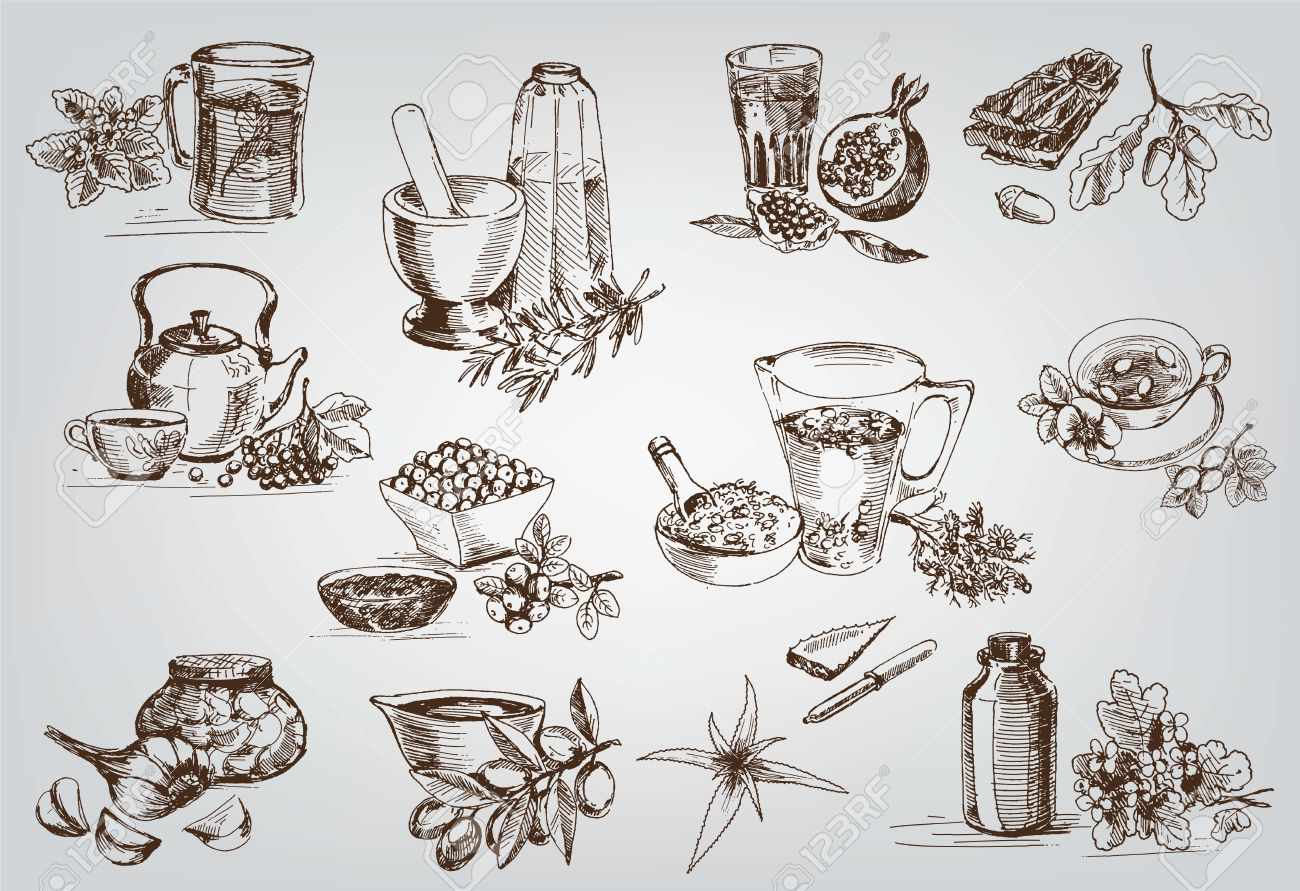 Plants And Herbs In Folk Medicine Set Of Vector Sketches Royalty.