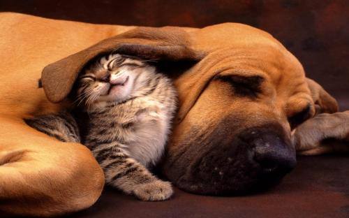Dogs And Cats Clip Art.