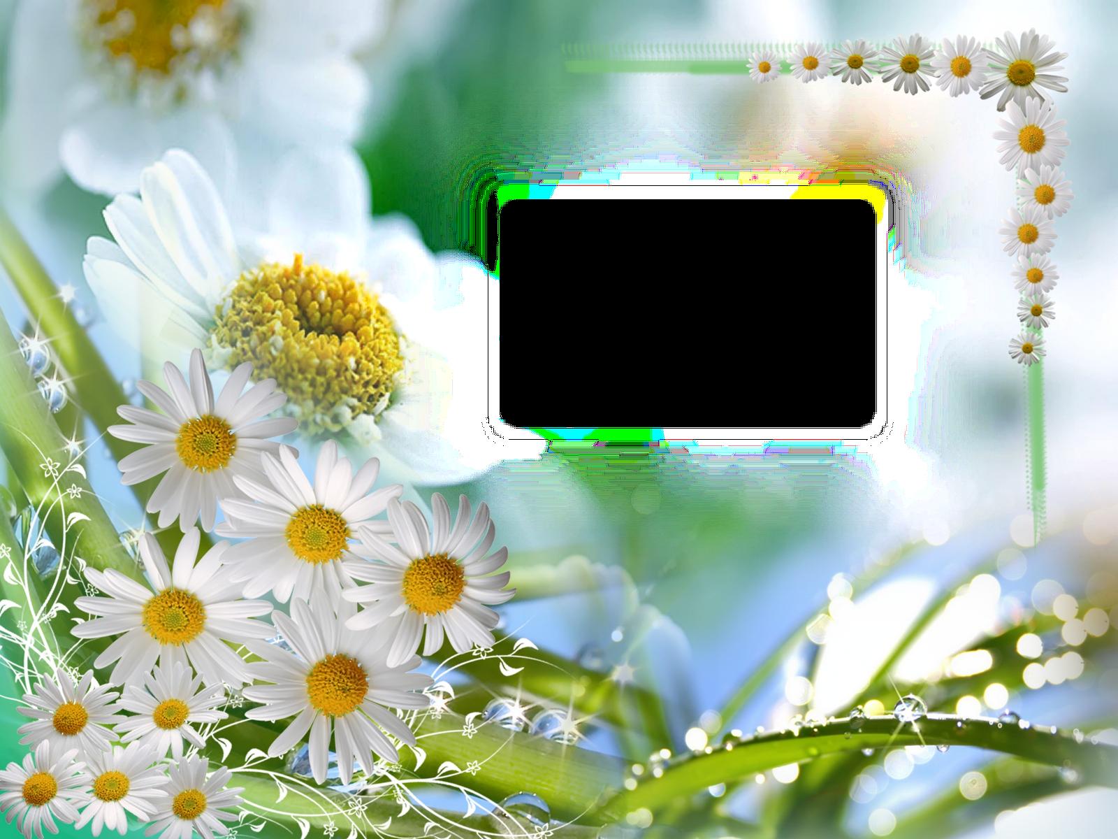 Download HD Download Fondos Para Bodas Gratis Png Clipart.