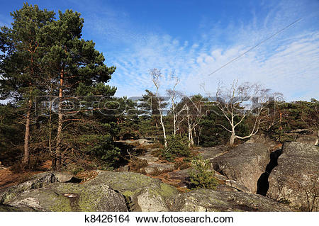 Stock Photo of The forest of Fontainebleau k8426164.