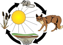 Food chain clipart images.