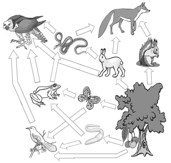 17 Best images about FoOd CHaInS/WeBS, eCOsyStEMS, and BIoMes on.