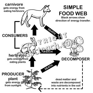 food chain clipart black and white clipground