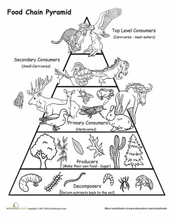 17 Best ideas about Food Chain Diagram on Pinterest.