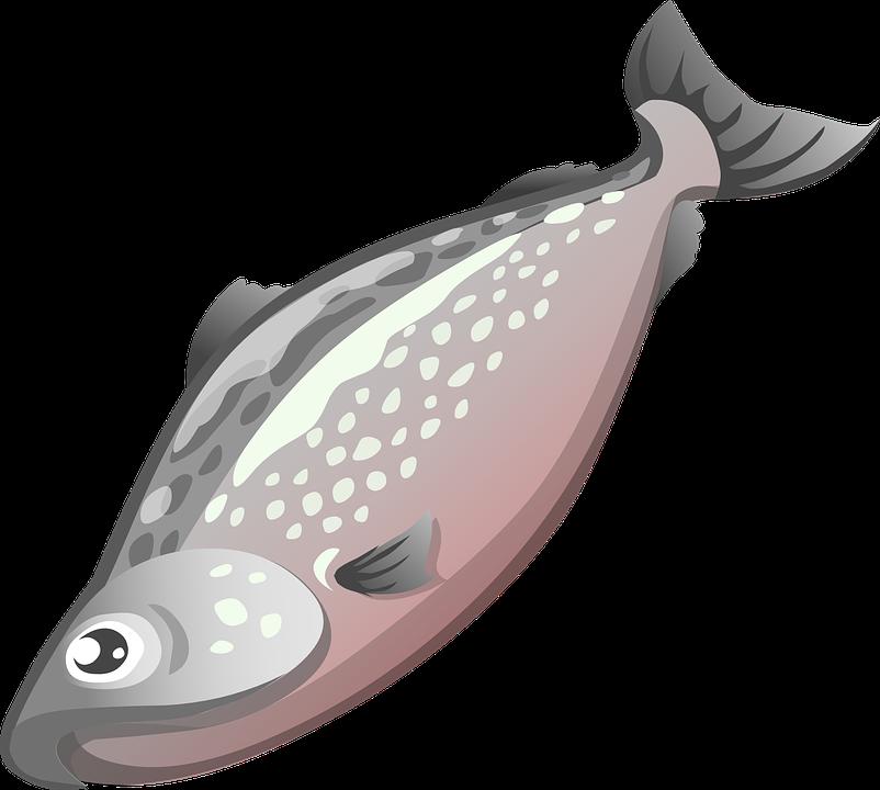 Free vector graphic: Fish, Food, Animal, Seafood, Grey.