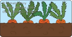 Clip Art Illustration of Carrots Growing in a Garden.
