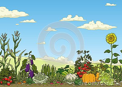 Vegetable Garden Bed Royalty Free Stock Photo.