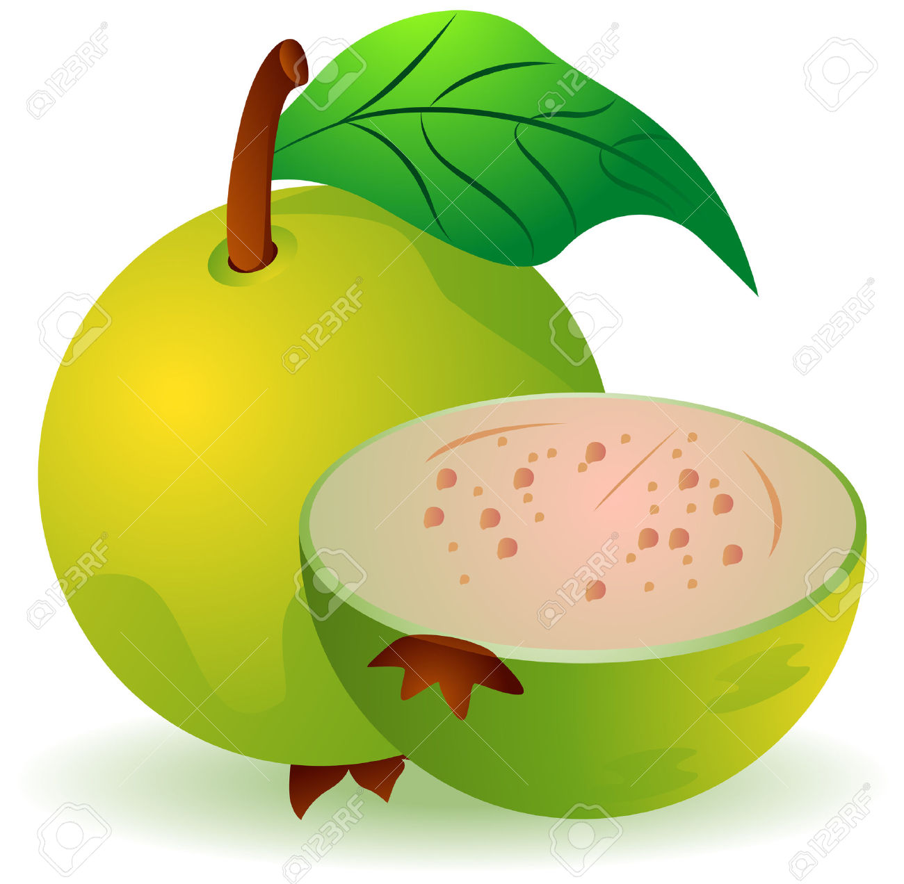 Guava Illustration With Clipping Path Royalty Free Cliparts.