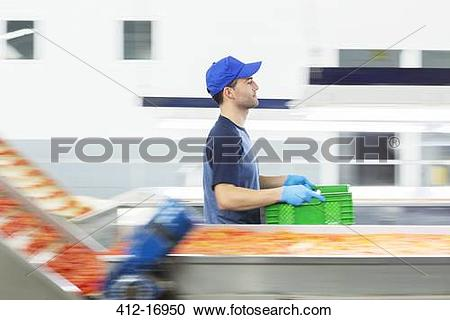 Stock Photography of Worker carrying crate in food processing.
