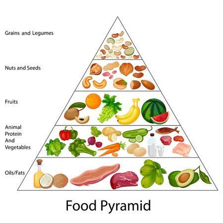 2,972 Food Pyramid Stock Vector Illustration And Royalty Free Food.