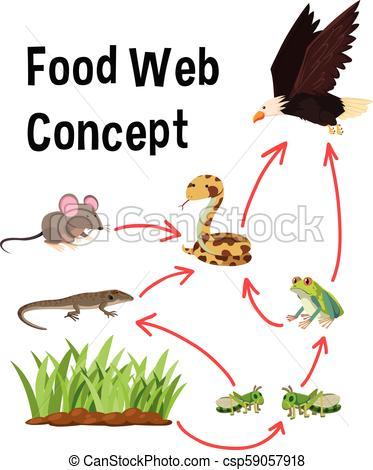 Science food web concept.