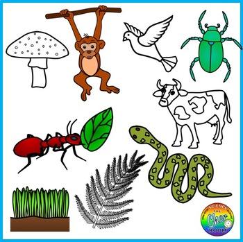Ecosystem Clipart (Energy Pyramid, Food Chain, Food Web).