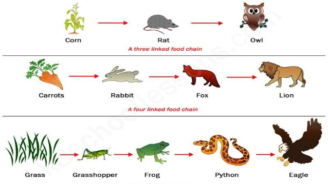 Food web clipart 1 » Clipart Station.