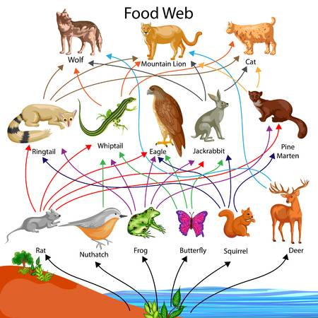 Food web clipart 4 » Clipart Station.
