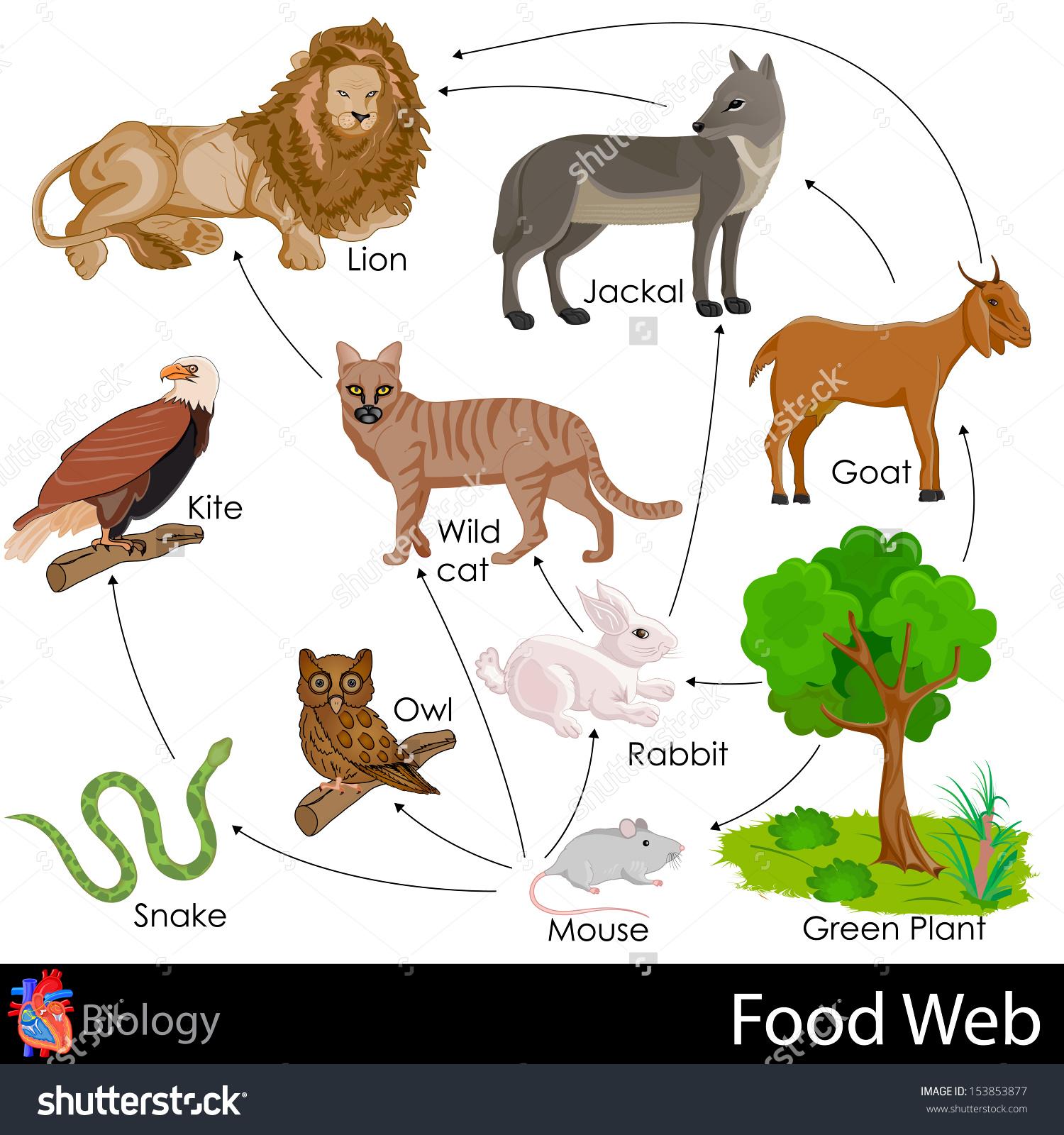 Desert Food Web Clipart.