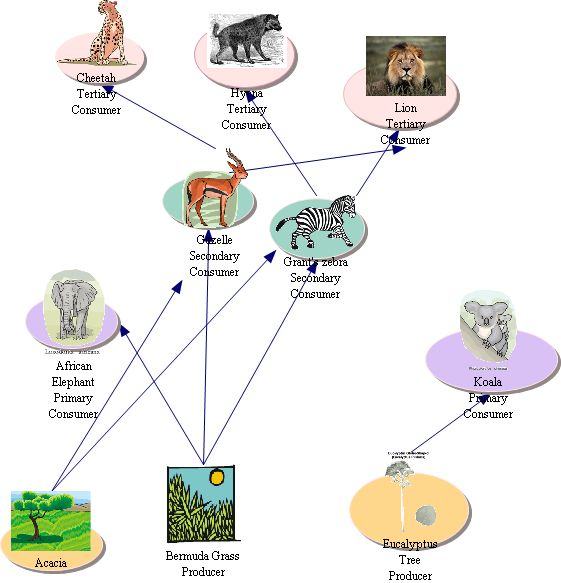 Food Web In Africa Clipart 20 Free Cliparts