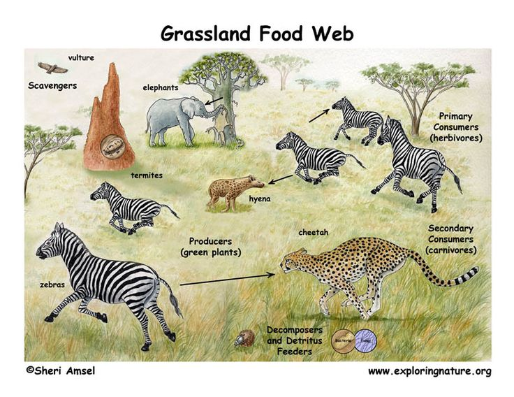 Food Web In Africa Clipart.